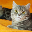 Two cats on orange background - Stock Photo