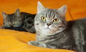 Two cats on orange background — Stock Photo
