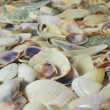 Seashells background - Stock Photo