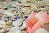 Conchiglie e fiori di gladiolo rosa, sfondo — Foto Stock