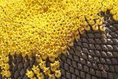 Beautiful ripen sunflower close up, background — Stock Photo