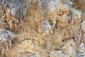Soil background with roots — Stock Photo