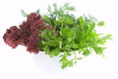 Fresh parsley, dill and lettuce in bowl isolated on white — Stock Photo