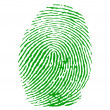 Stock Vector: Green fingerprint vector