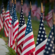 American flags — Stock Photo #6094239