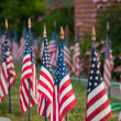 American flags — Stock Photo