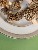 Morel Mushrooms — Stock Photo