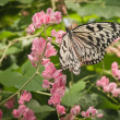 Butterfly — Stock Photo #6189222