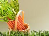 Easter carrots — Stock Photo
