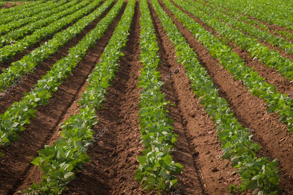 Купить землю под сельськое хозяйство в чехии