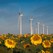 Royalty-Free Stock Photo: Wind turbines and sunflowers