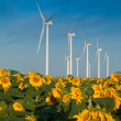 Stock Photo: Wind turbines and sunflowers