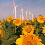 Wind turbines and sunflowers — Stock Photo