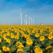 Wind turbines and sunflowers — Stock Photo