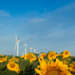 Wind turbines and sunflowers — Stock Photo #6486368