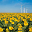 Wind turbines and sunflowers — Stock Photo #6486435