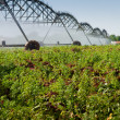 Farm Irrigation — Stock fotografie