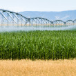 Farm Irrigation — Foto de Stock