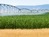 Farm Irrigation — Stock Photo