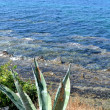 Stock Photo: Aloe and clear sea