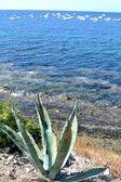 Aloe and clear sea — Stock Photo