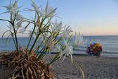 Sea lilies — Stock Photo