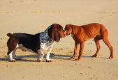 Dogs meeting — Stock Photo