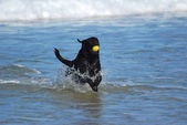 Dog playing in water — Stock Photo