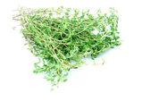 чабреца трава — Стоковое фото