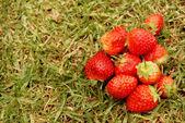 Truskawki w trawie — Zdjęcie stockowe