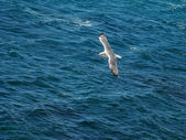 Gulls flying over the sea — Stock Photo