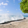 Beach of Aruba - Stock Photo
