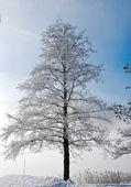 Frost on the tree — Foto de Stock