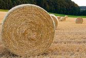 Závitky ze slámy v poli — Stock fotografie
