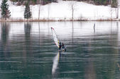Windsurfing on the ice — Stock Photo