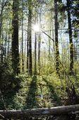 Silencio de la madera — Foto de Stock