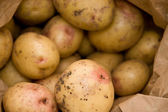Potatoes isolated — Stock Photo
