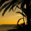 Sunset in tropics — Stockfoto #6245810
