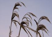 Cold grass in the sky — Stock Photo