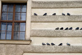 Birds sitting on an building — Stock Photo