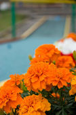 Flowers and mini golf court — Stock Photo