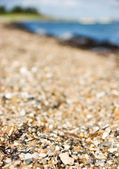 Beach macro — Stock Photo