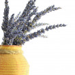 Lavendel - Stock Photo