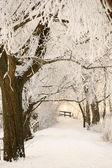 Baumallee im Winter — Stock Photo