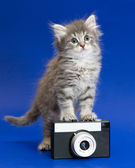 Gray kitten and camera — Stock Photo