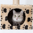 Royalty-Free Stock Photo: Gray cat in cats house isolated