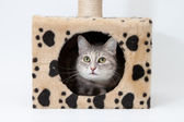 Gray cat in cats house isolated — Stock Photo