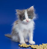 Very little kitten looks admiringly — Stock Photo