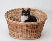 BW cat in the basket isolated — Stock Photo