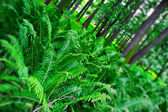 Ferns in forest — Stock Photo